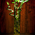 Bambooesque  by Olivier Le Queinec
