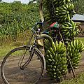 Banana Bike by Brian Kamprath