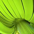 Banana Bunch by Heiko Koehrer-Wagner