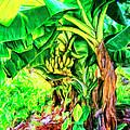 Bananas In Lahaina Maui by Dominic Piperata