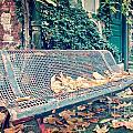 Banc Public by Delphimages Photo Creations