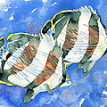 Banded Butterflyfish by Pauline Walsh Jacobson