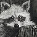 Bandit by Margaret Mackie