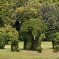 Bang Pa-in Royal Palace Elephant Topiary Dtha0116 by Gerry Gantt