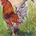 Bantam Cockerel by Margaret Merry