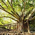 Tree Of Life by Jamie Pham