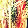 Banyan Tree by Chris Andruskiewicz