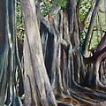 Banyan Trees by Karol Wyckoff
