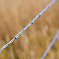 Barb Wire Country Fence by Joshua Rainey
