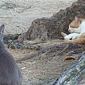 Barbados Cat Family by Diane Palmer