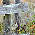 Barbed Fence by GK Hebert Photography