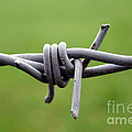 Barbed by Vix Edwards