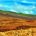 Barbed Wire Fence by Paulette B Wright