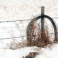 Barbed Wire Fence Post by Brian Ewing