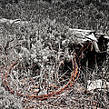 Barbwire Wreath 1 by Susan Kinney