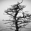 Bare Cypress by Melinda Ledsome