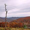 Bare Naked Tree by Francie Davis