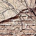 Bare Tree Adobe Wall by Joe Kozlowski