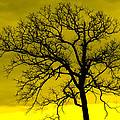 Bare Tree Against Yellow Background E88 by Wendell Franks