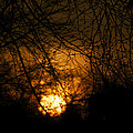 Bare Tree Branches With Winter Sunrise by Thomas Woolworth