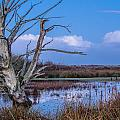Bare Tree In Marsh by Greg Nyquist