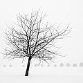 Bare Tree In Winter - Wonderful Black And White Snow Scenery by Matthias Hauser