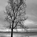 Bare Tree On A Wintery Tahoe Shoreline by Scott Lenhart
