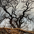 Bare Tree On The Hill by Laura Duhaime