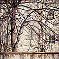 Bare Tree With Wall And House by Silvia Ganora