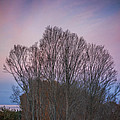 Bare Trees And Autumn Sky by David Stone