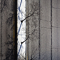 Bare Trees by Margie Hurwich