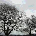 Bare Trees Winter Sky by David Stone