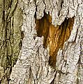 Bark Heart by Deborah Johnson