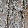 Bark by Ione Hedges