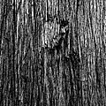 Bark Mark by Jaqui Ares