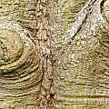 Bark Of Silk Floss Tree Background Texture Pattern by Stephan Pietzko