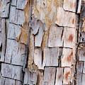 Bark On A Tree In The Desert In Sedona by Tom Bol