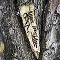 Bark Tattoo by LeeAnn McLaneGoetz McLaneGoetzStudioLLCcom
