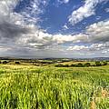 Barley View  by Rob Hawkins