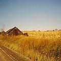 Barn And Corn Field by Robert Floyd