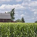 Barn And Corn by John McGraw