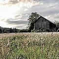 Barn And Grass by Athena Mckinzie