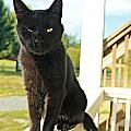 Barn Cat Pose by Vicki Dreher