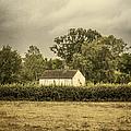 Barn In Corn Field by Margie Hurwich