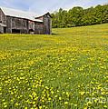 Barn In Dandelion Field by Alan L Graham