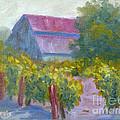 Barn In Vineyard by Carolyn Jarvis