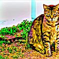 Barn Kitty by Alice Gipson