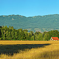 Barn On Cascade Road In Rockport by Panoramic Images
