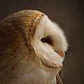 Barn Owl 3 by Ernie Echols