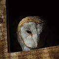 Barn Owl 5 by Ernie Echols